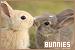 Rabbits and Bunnies: