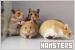 Hamsters: