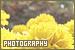 Photography: