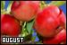 Months: August: