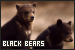 Bears: Black: